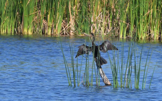 The Ritch Grissom Memorial Wetlands in Viera is a popular spot for bird-watching.