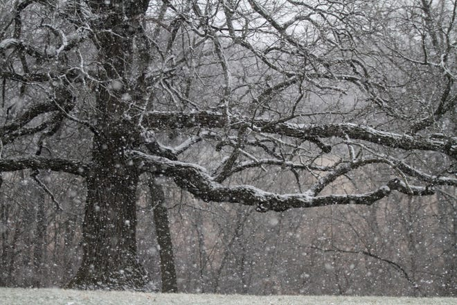 Snow falls at Hickory Hills County Park. A brief snowfall dusted Iowa on March 22.