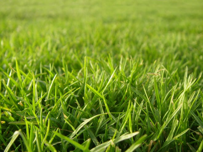 Now is the time to start giving your grass a little TLC.
