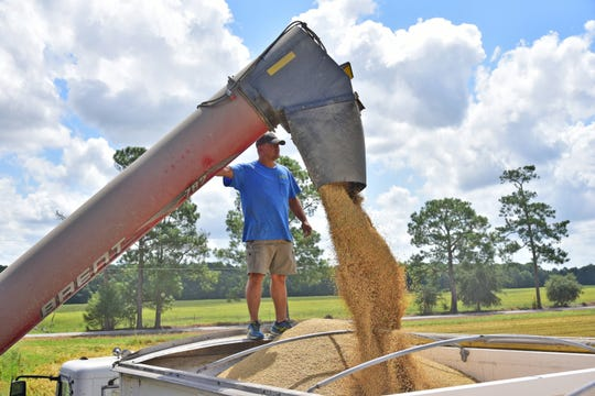 Farmer Michael Fruge, of Eunice, loads rice into a tractor-trailer to be hauled to a nearby grain elevator in August.