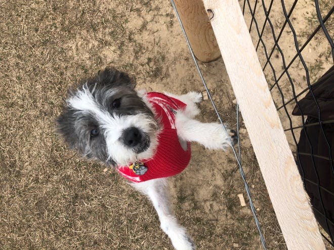 Pet owners in Livonia will have to keep dogs on a leash when not at home or at a dog park.
