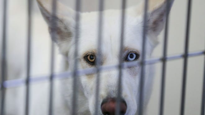 Coronavirus Is Keeping People Inside And Some Adopted Pets For Company