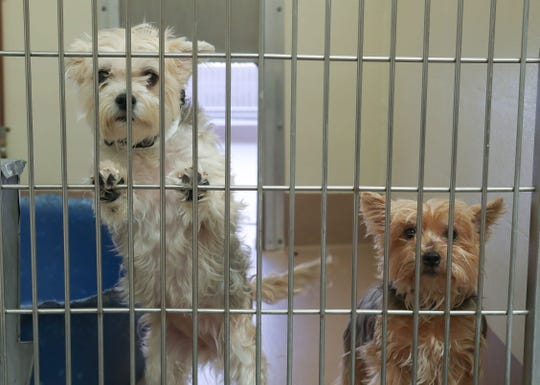 Two dogs await adoption at the Thousand Palms Animal Campus, March 23, 2020.