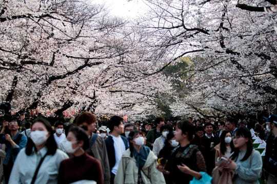 People wearing face masks, amid concerns of the COVID-19 coronavirus, walk under the cherry blossoms at Ueno Park in Tokyo last March. The coronavirus pandemic is sending airfares to rock-bottom levels, including some deals to Tokyo.
