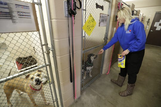 Talia Rice, an employee at the Fox Valley Humane Association, gives treats to dogs on March 19, 2020 in Appleton.