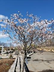 J&J Landscaping and Garden Center.