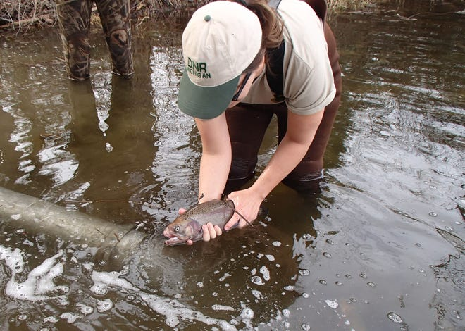 DNR employees stocked adult trout in the Spring of 2017, courtesy of broodstock retired from the state's fish hatcheries, in the Huron River at Proud Lake Recreation Area and Spring Mill Pond at Island Lake Recreation Area.