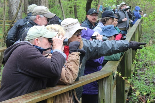 These birders were camped out on Magee Marsh Wildlife Area's boardwalk near Oak Harbor during the 2019 Biggest Week in American Birding. The Black Swamp Bird Observatory announced Tuesday it had canceled this year's Biggest Week, due to coronavirus concerns.