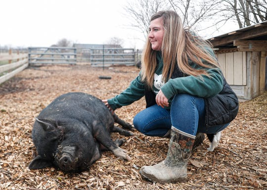 Olivia Head, 17, pets the belly of a pig at the Oinking Acres Pig Sanctuary and Rescue located off of N. Co. Rd. 650 E, Brownsburg, Ind., Monday, March 16, 2020. Head founded the sanctuary in 2017 and have taken in 158 abandoned, neglected, and unwanted pot-bellied pigs. One hundred and twenty-nine of those pigs have been placed to new homes. Head adopted her love of animals from her mom and quickly followed her footsteps into fostering and rescuing animals.
