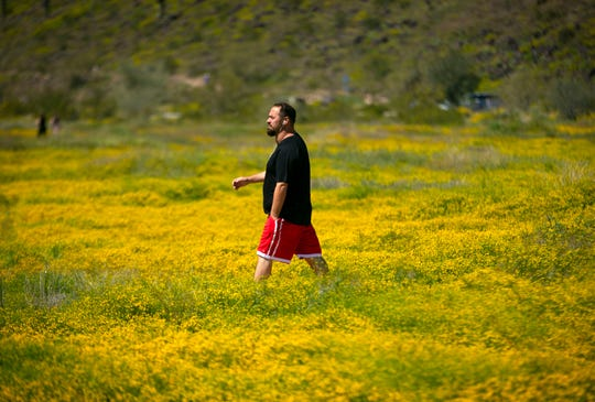 Matt Alexander of Glendale, hikes on a trail through globe chamomile at Thunderbird Park in Glendale on March 24, 2020.