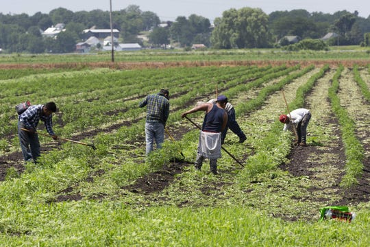 Hudson Valley fruit and vegetable growers aren't sure whether they will have sufficient labor this year due to restrictions on processing visas from Mexico.