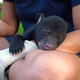 Adorable black bear cub sent to Brevard Zoo after its mother abandons him in the Ocala National Forest.
