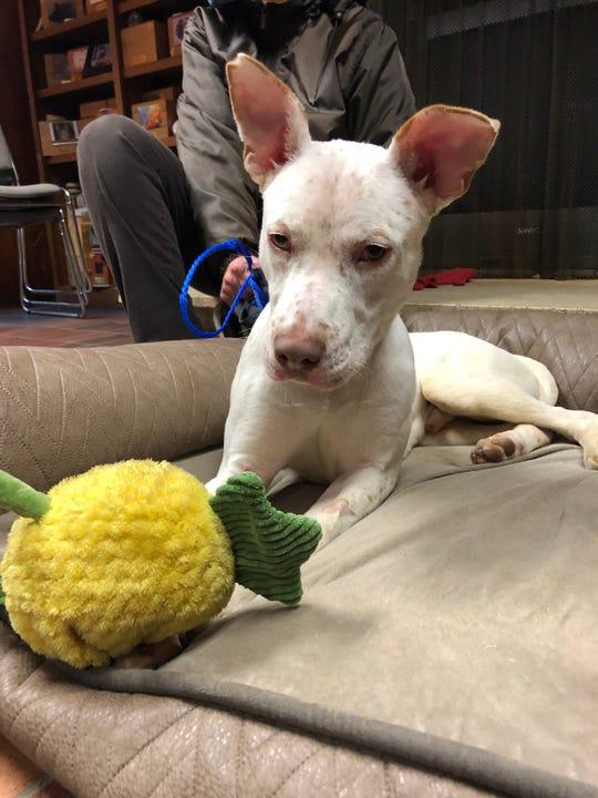 DJ, a dog at Animal Lifeline of Iowa