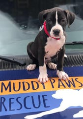Muddy Paws Rescue in New York is reporting shelters they work with are either all out of or almost out of cats and dogs.
