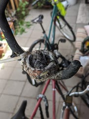 A baby hummingbird in a nest in the back patio of Caroline Davies' home in north Phoenix on March 25, 2020.