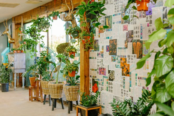 Inside Dig It Gardens, customers can find house plants. The store switched to appointment-only shopping to stop the spread of coronavirus.