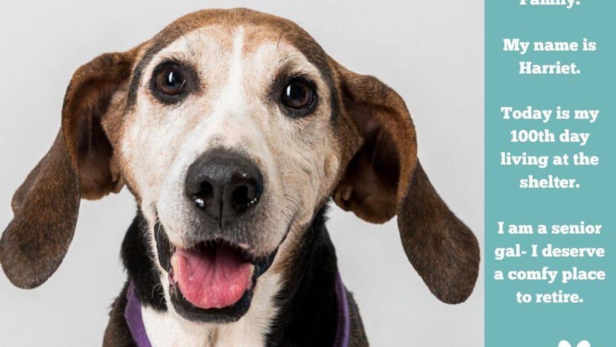 Humane Society Of Sheboygan County Finds Homes For Dogs Before Closing