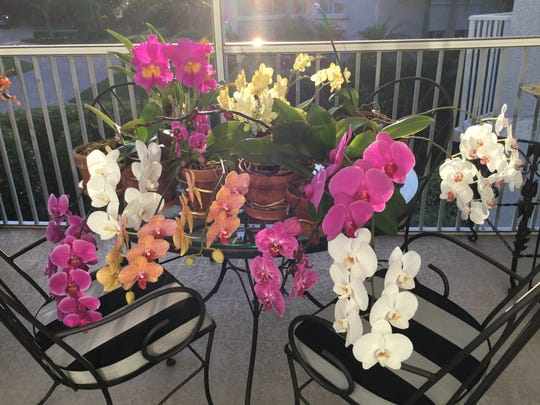 When you're at home all day, you have more time to devote to your orchids, as Sara Beth White knows.