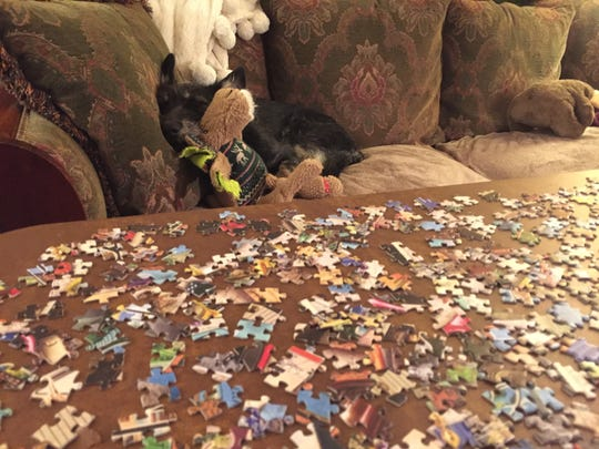 St. Cloud Times reporter Jenny Berg works on a puzzle at home while her dog Juniper sleeps on the couch.