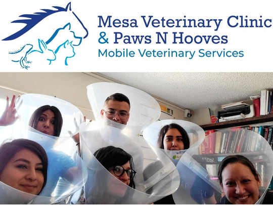 The Mesa Veterinary Clinic staff had fun in announcing they are still open and under the 'essential' businesses in the stay-at-home order.