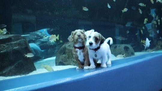 'Best. day. ever.' Puppies roam free at aquarium closed to public during coronavirus outbreak.