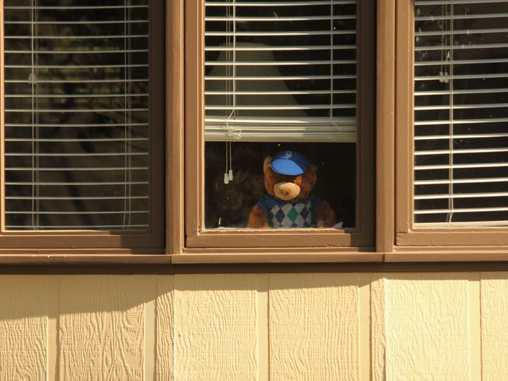 """Bears on display in windows in a Powdersville neighborhood as part of a """"bear hunt"""" that allows children who are social distancing to do an outdoor activity by seeing teddy bears from the road."""