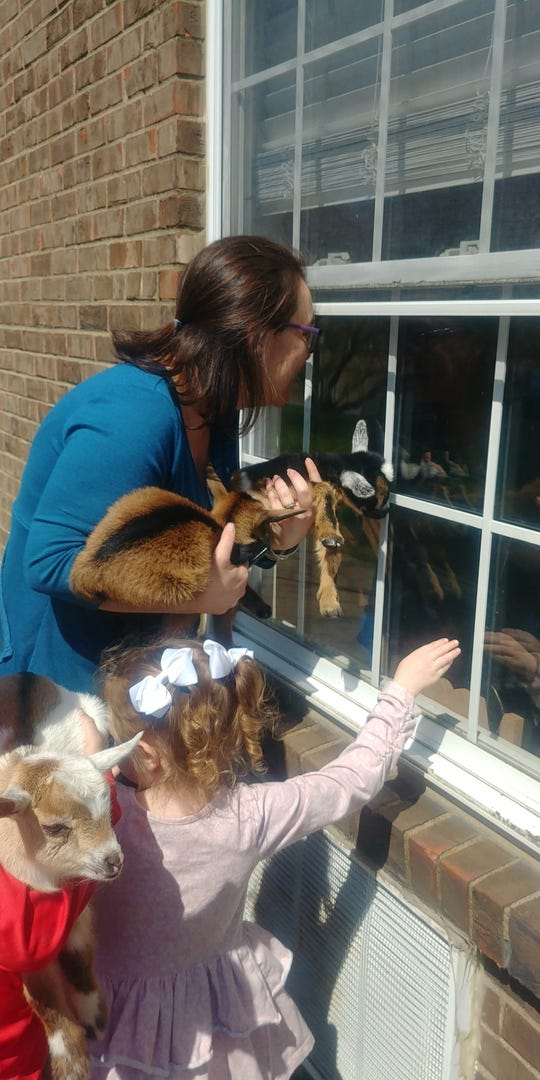 Visitors from the The Regency Apartments next door to Redbanks have walked over and visited with Redbanks skilled care facility's residents through the windows with their baby Nigerian Dwarf goats  The mother is Kelsie Todd with her 8-year-old son Zander Todd and her 4 year- old-daughter Carlee Todd.