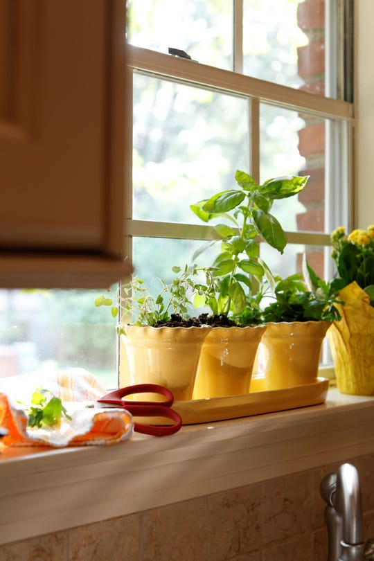 Start a window sill herb garden to have fresh herbs within reach.