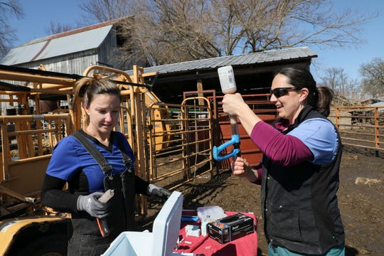 Alana McNutt, a veterinarian at Tipton Veterinary Services, works on both large and small animals at the veterinary clinic.
