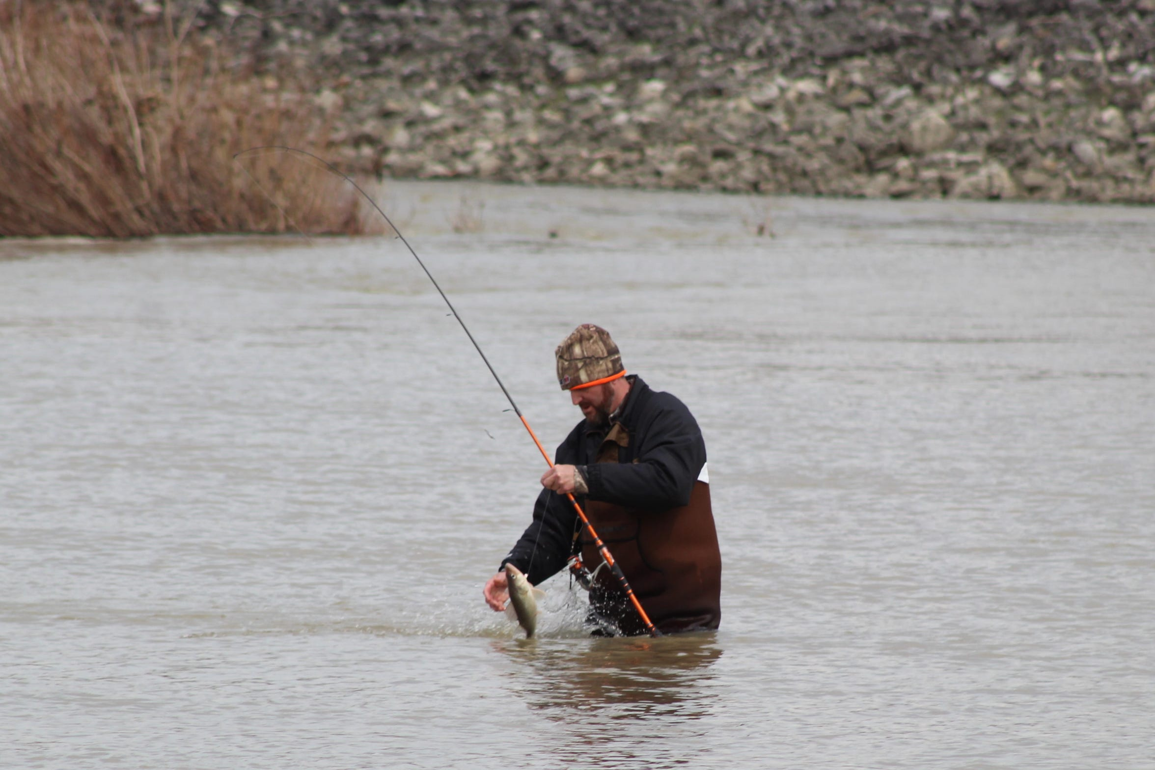 A lone fisherman catches a walleye in the Sandusky River Thursday in Fremont. The annual walleye run has continued to draw hundreds of visitors to Sandusky County this year, even as the state deals with coronavirus fears.