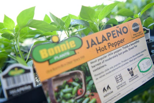 Jalape–o Hot Peppers for sale at Mayo Garden Center's Bearden location in Knoxville, Tennessee on Friday, March 27, 2020.