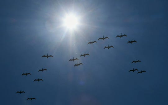 A flock of pelicans flies overhead past the blazing sun Saturday in Satellite Beach.