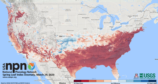 Spring leaf-out is well ahead of schedule in large parts of the country. Upstate New York should be shaded red or orange in future editions of the map.