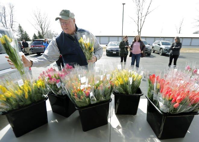 Steve Langlais picks up free tulips at Flower Girl Design Studio last Tuesday.
