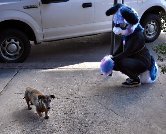 Coming upon a stray dog on Cypress St., Ryan Ekberg tries to make friends Wednesday. But perhaps spooked by her costume's head, the dog took a wide berth around her.