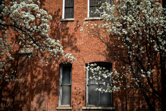 Bradford pear trees bloom along Orchard Street in Over-the-Rhine on Friday, March 27, 2020.