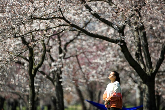 In this March 26, 2020, photo, a person takes in the afternoon sun amongst the cherry blossoms along Kelly Drive in Philadelphia. For millions of seasonal allergy sufferers, the annual onset of watery eyes and scratchy throats is bumping up against the global spread of a new virus that produces its own constellation of respiratory symptoms.