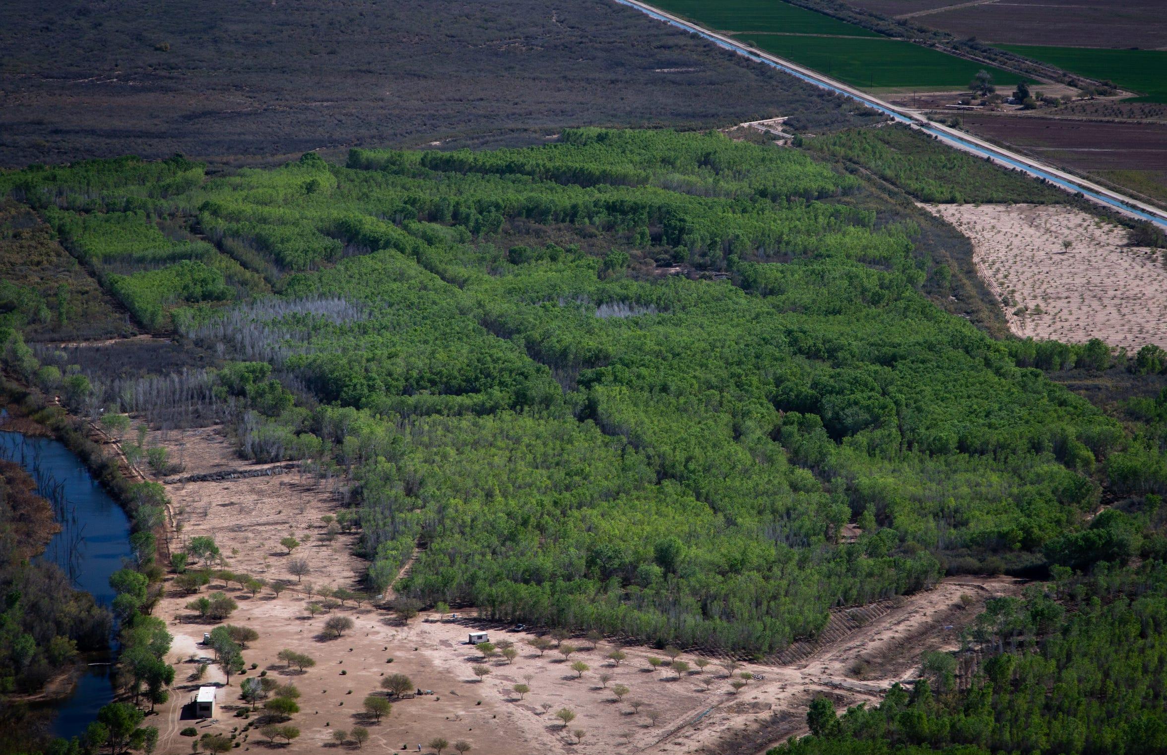 El Instituto Sonora administra el área de restauración de Laguna Grande en el Delta del Río Colorado en México.