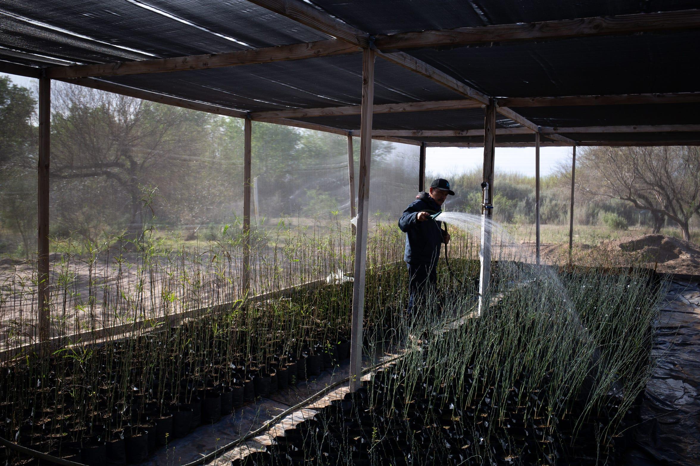 Henry Alaniz riega plantas en el vivero en el área de restauración de la Colonia Miguel Alemán en Baja California, México.