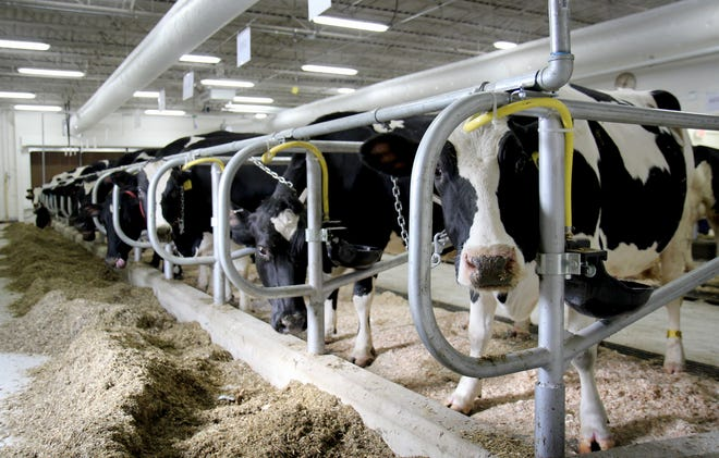 Without students on campus or significant research being conducted in the DCC, and in anticipation of possible labor shortages due to COVID-19 illness, UW Madison CALS temporarily close the campus facility and consolidate the dairy herd at the college's agricultural research stations