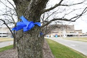 Blue ribbons on the trees at the entrance to Beaumont hospital, off 13 mile, in Royal Oak, Michigan on March 31, 2020.