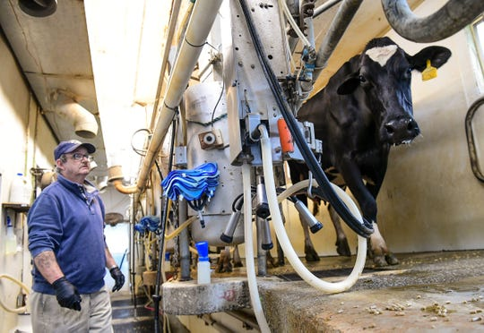Employee Lonnie Hyde milks cows at Happy Cow Creamery in Pelzer Tuesday.