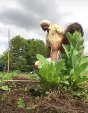 Elizabeth McNabb has taken this time to dive into her music and her garden, spending the days inon her permaculture farm and native garden she shares with Myron Saul.