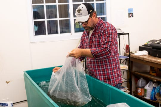 Owner Eric Beene releases fresh minnows in a tank inside the bait shop at Catchem' Lake, Monday, Mar. 30, 2020, in Memphis, TN.