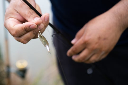Iban Alarcon hooks a new bait minnow on his line at Catchem' Lake, Monday, Mar. 30, 2020, in Memphis, TN.