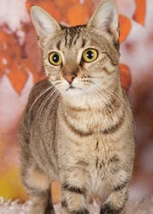 Moondancer is available for adoption at the Friends for Life Animal Rescue's adoption center at 952 W. Melody Ave. in Gilbert. For more information, visit Friends for Life online at azfriends.org or call 480-497-8296.