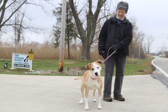 Mary Anne Koebel, treasurer of the Humane Society of Ottawa County, takes Penny, one of their resident dogs, out for a walk.