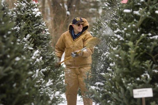 Jon Freckleton brushes snow off his precut trees as he gets his Penfield tree farm ready for customers back in December 2006.