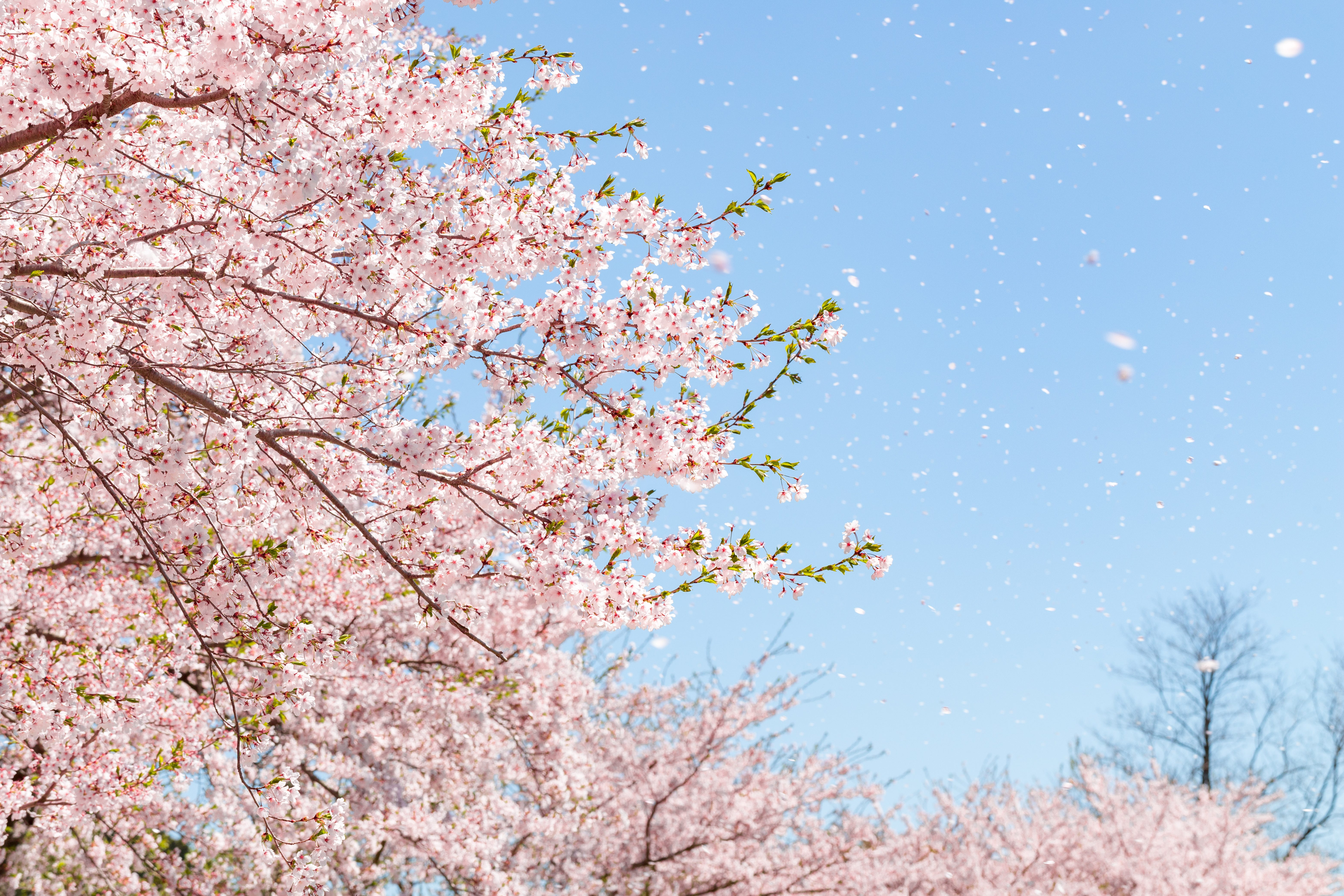 Why spring feels more important than ever in 2021