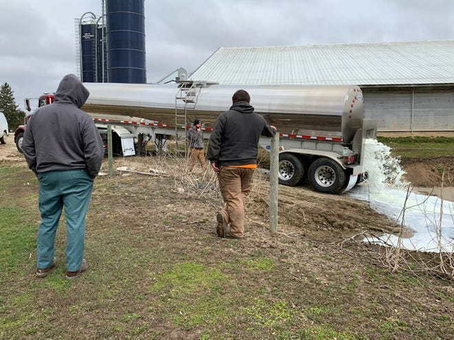 The Elbe family of West Bend watch as their milk is being dumped because there was no market for it last week.